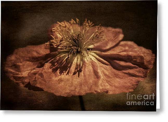 Genealogy Photographs Greeting Cards - Passe Panache Greeting Card by Jean OKeeffe Macro Abundance Art