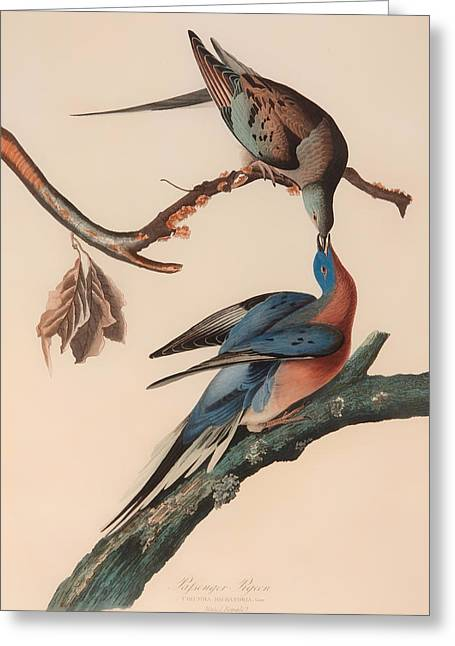 Bird On Tree Greeting Cards - Passenger Pigeon Greeting Card by John Audubon
