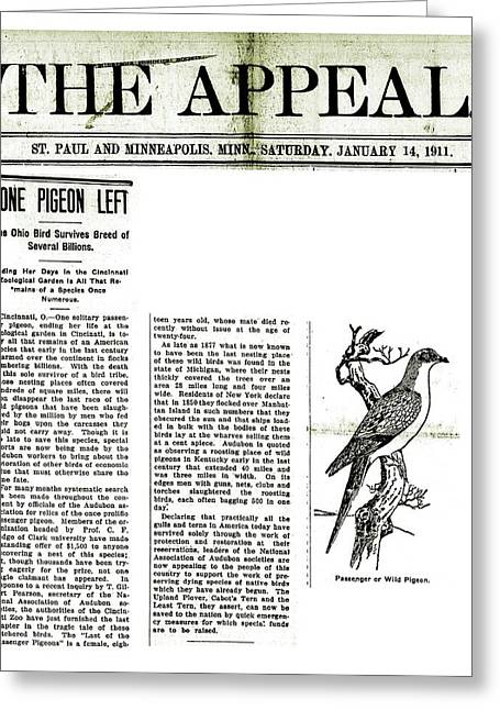 Passenger Pigeon Newspaper Article Greeting Card by Library Of Congress