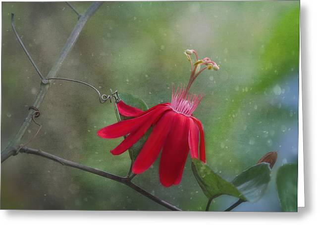 Charming Cottage Greeting Cards - Passiflora Flower Greeting Card by Kim Hojnacki