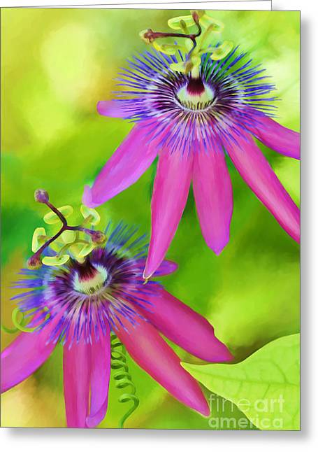 Passiflora Greeting Cards - Passiflora Piresii Vine  - Passiflora Twins Greeting Card by Michelle Wiarda
