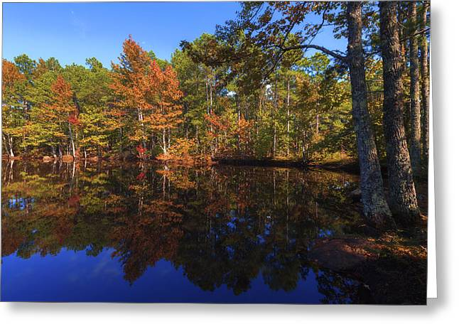 Fall Trees Greeting Cards - Passing Through Greeting Card by Chad Dutson
