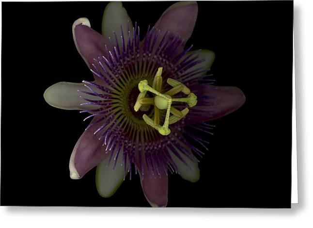 Passiflora Digital Art Greeting Cards - Passion Angle Front Greeting Card by Heather Kirk