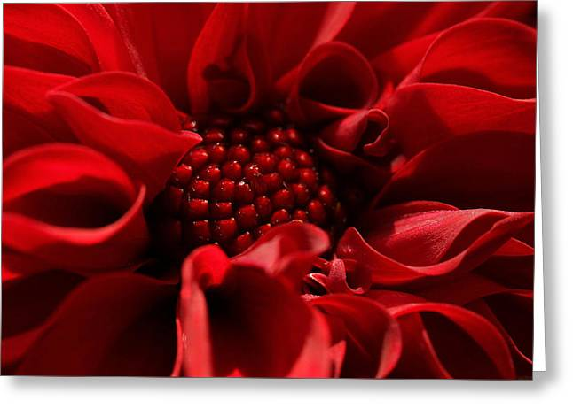 Tasteful Photographs Greeting Cards - Passion Greeting Card by Connie Handscomb
