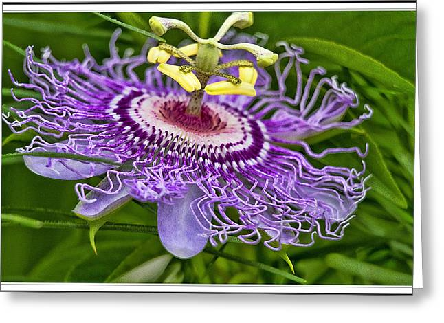 Passion Fruit Greeting Cards - Passion Flower Easter Greeting Card by Geraldine Scull