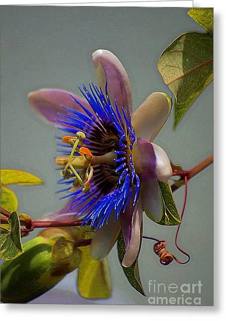John Kolenberg Greeting Cards - Passion Flower Greeting Card by John  Kolenberg