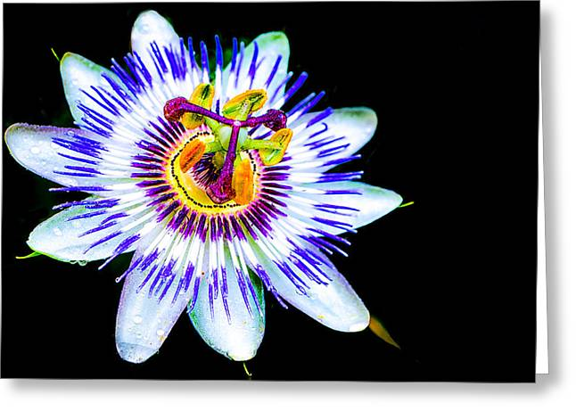 Passion Fruit Greeting Cards - Passion flower vine Greeting Card by Keith Homan