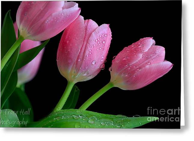 Passion For Pink Greeting Card by Tracy  Hall