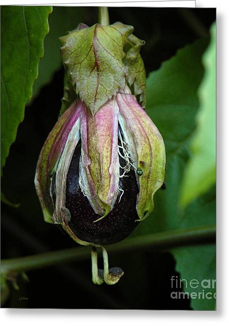 Passion Fruit Greeting Cards - Passion Fruit 10-17-13 by Julianne Felton Greeting Card by Julianne Felton