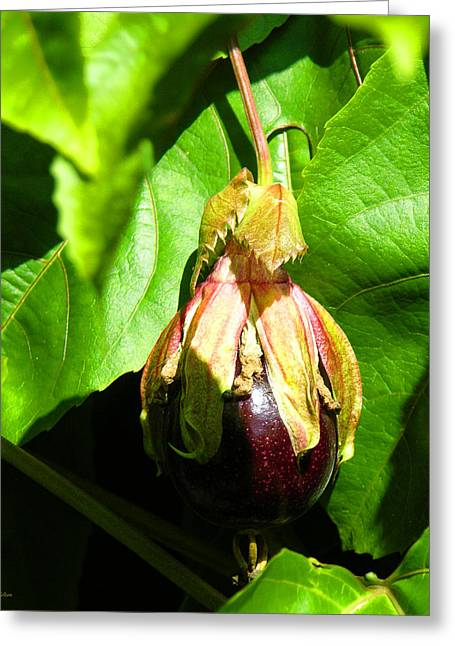 Passion Fruit Greeting Cards - Passion Fruit 10-18-13 by Julianne Felton Greeting Card by Julianne Felton