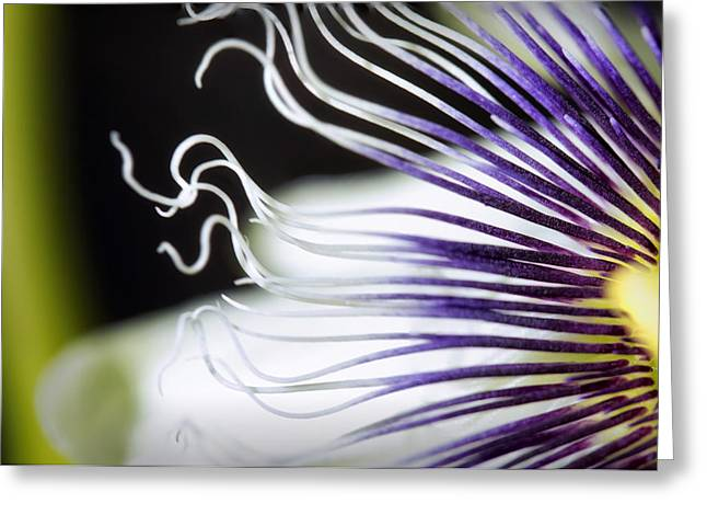 Passion Fruit Greeting Cards - Passion Fruit Flower Greeting Card by James Pommerening