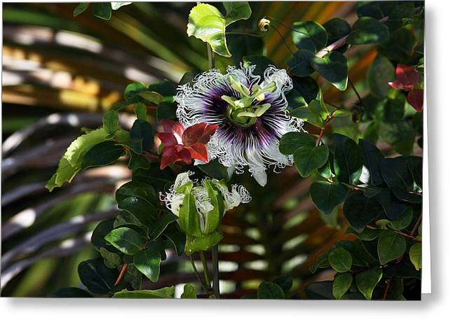 Passion Fruit Greeting Cards - Passion Fruit Greeting Card by Jeffrey Binion