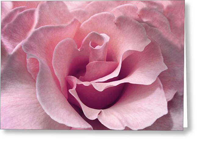 Pastel Pink Greeting Cards - Passion Pink Rose Flower Greeting Card by Jennie Marie Schell