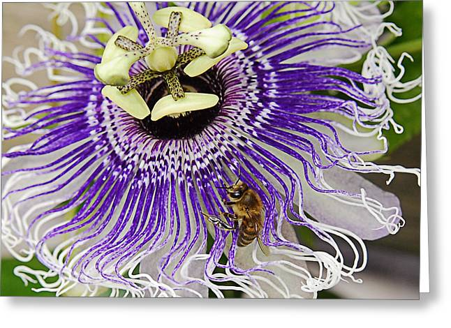 By Myself Greeting Cards - Passion to Bee Greeting Card by Maria Martinez