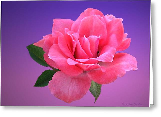 Numbers Plus Photography Greeting Cards - Passionate Pink Greeting Card by Joyce Dickens