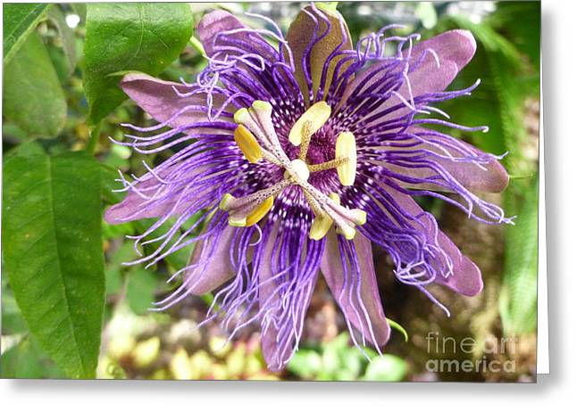 Passionflower Greeting Cards - Passionately Yours Greeting Card by Lingfai Leung