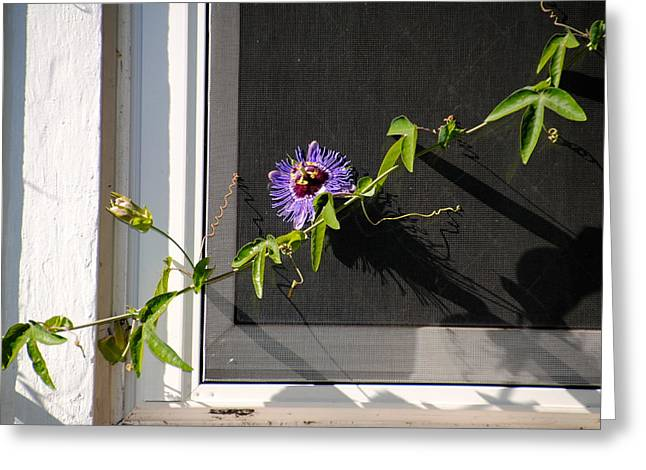 Passionflower Greeting Cards - Passionflower Greeting Card by Leola Jewett-Verzuh