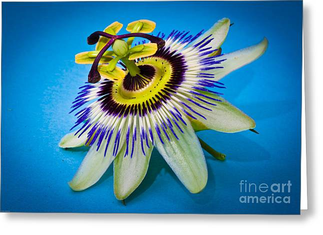 Passionfruit Greeting Cards - Passionfruit Flower Greeting Card by Alexander Whadcoat