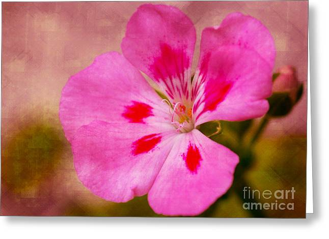 Dave Bosse Greeting Cards - Pastel Beauty Greeting Card by Dave Bosse
