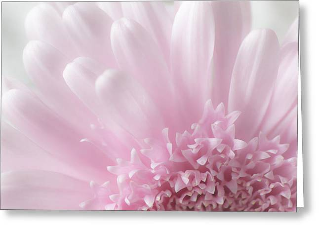 Breast Cancer Greeting Cards - Pastel Daisy Greeting Card by Dale Kincaid