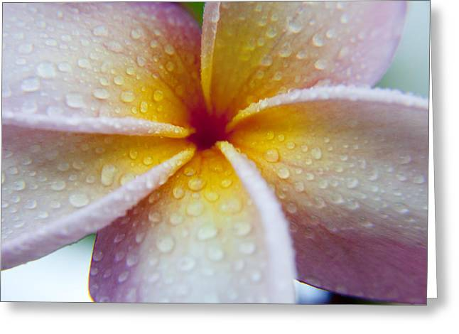 Plumeria Greeting Cards - Pastel Droplets Greeting Card by Sean Davey