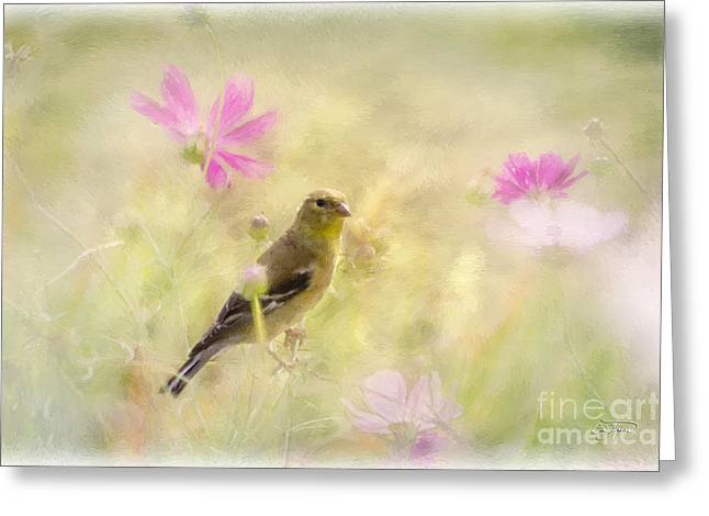 Cris Hayes Greeting Cards - Pastel Finch in Oil Greeting Card by Cris Hayes