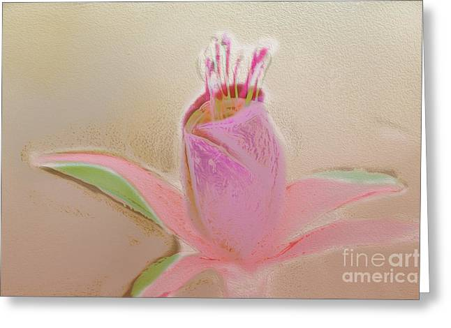 Stigma Greeting Cards - Pastel Flower Greeting Card by Terry Weaver