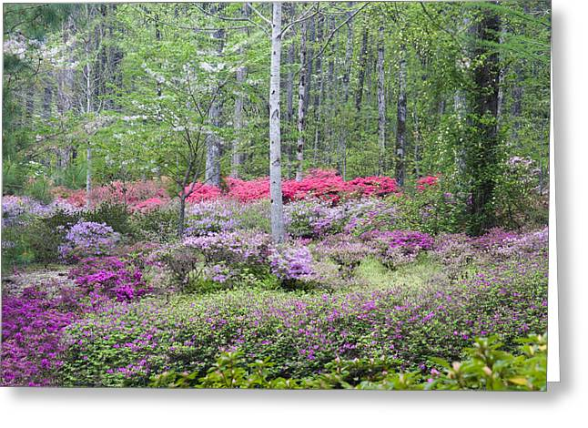Chatham Greeting Cards - Pastel Forest Greeting Card by Eggers   Photography