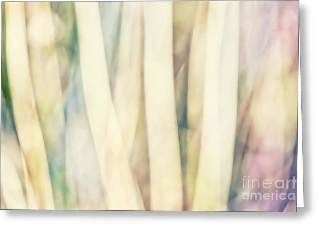 Abstracts From Nature Greeting Cards - Pastel Forest Wild Grasses Photographic Abstract Greeting Card by Natalie Kinnear