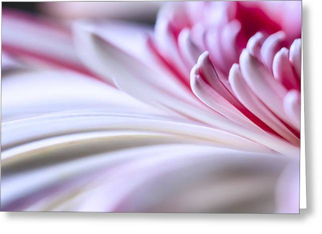Interior Still Life Greeting Cards - Pastel Gerbera Greeting Card by Adam Romanowicz
