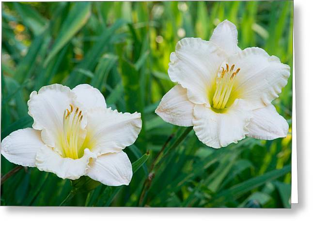 Tendrils Greeting Cards - Pastel Ghost Lilies Greeting Card by Douglas Barnett