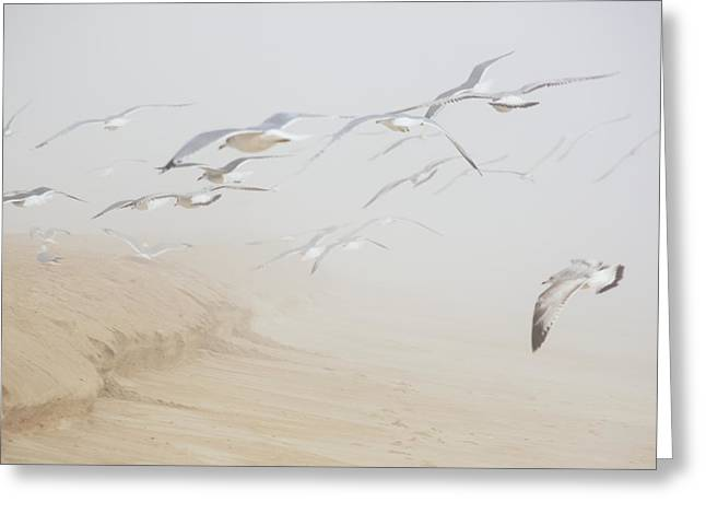 Foggy Beach Greeting Cards - Pastel Gulls in Fog Greeting Card by Kenneth Albin