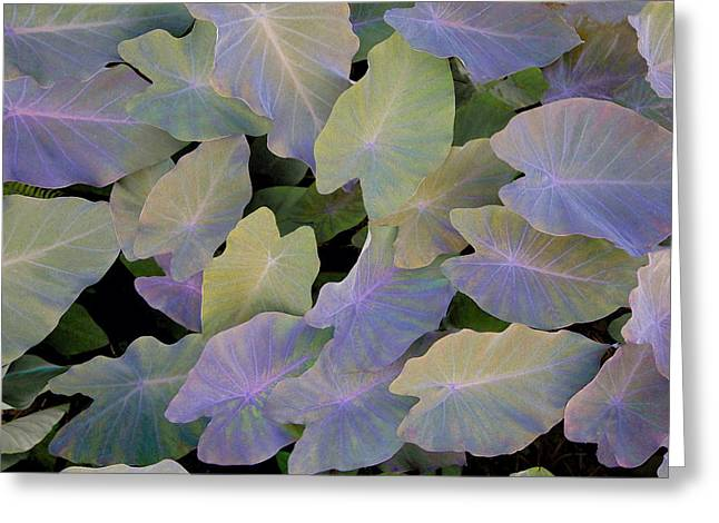 Har Greeting Cards - Pastel Leaves Greeting Card by James Steele