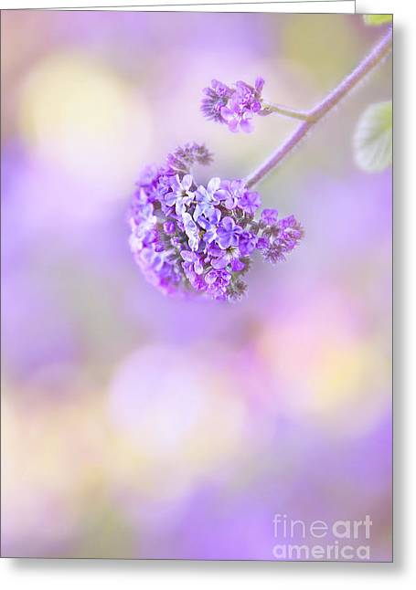 Floral Still Life Greeting Cards - Pastel Moods Greeting Card by Evelina Kremsdorf