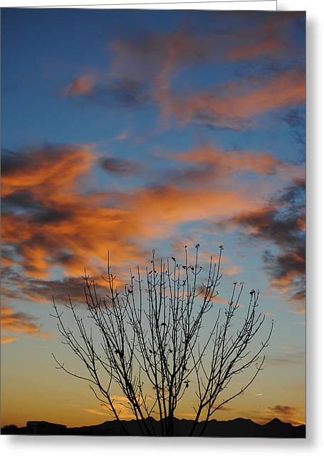 Edward Curtis Greeting Cards - Pastel Morning Greeting Card by Edward Curtis