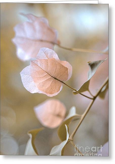 Woody Vine Greeting Cards - Pastel Petals  Greeting Card by Julie Palencia