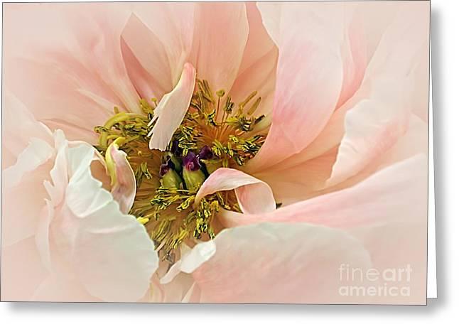 Yellow Stamen Greeting Cards - Pastel Pink Peony Greeting Card by Kaye Menner