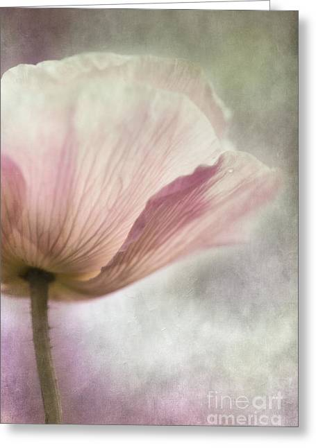 Pink Pastels Greeting Cards - Pastel Pink Poppy Greeting Card by Priska Wettstein