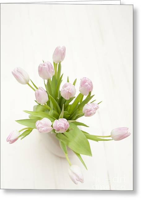 Selective Soft Focus Greeting Cards - Pastel Pink Tulips Greeting Card by Anne Gilbert