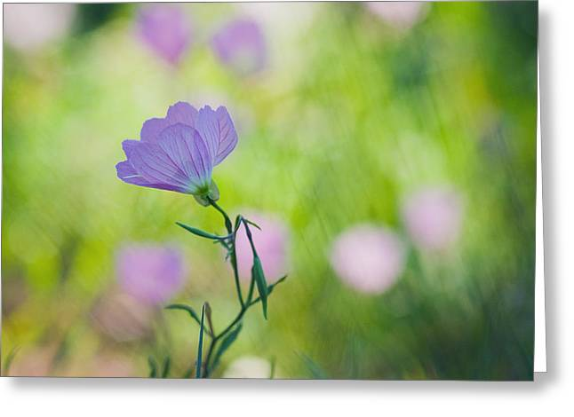 Olive Digital Art Greeting Cards - Pastel Profile Greeting Card by Joel Olives