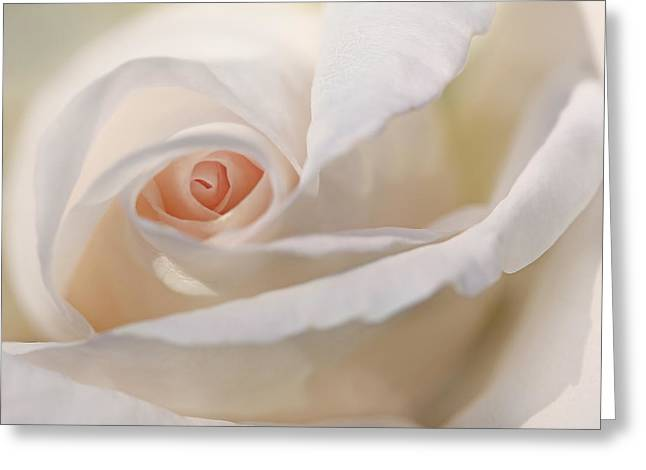 Abstract Rose Abstract Greeting Cards - Pastel Rose Flower Macro Greeting Card by Jennie Marie Schell