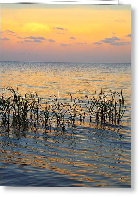 Cedar Key Greeting Cards - Pastel Shoreline 1 Greeting Card by Sheri McLeroy