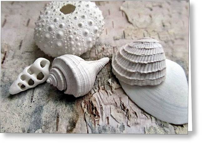 Fish Digital Art Greeting Cards - Pastel Urchin White Corals Birch Bark Greeting Card by Danielle  Parent
