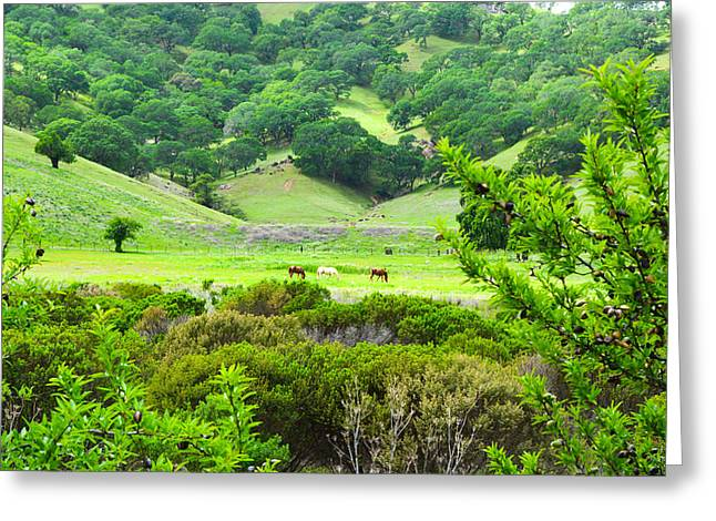 Pastureland Greeting Cards - Pastoral Peace Greeting Card by Brian Tada