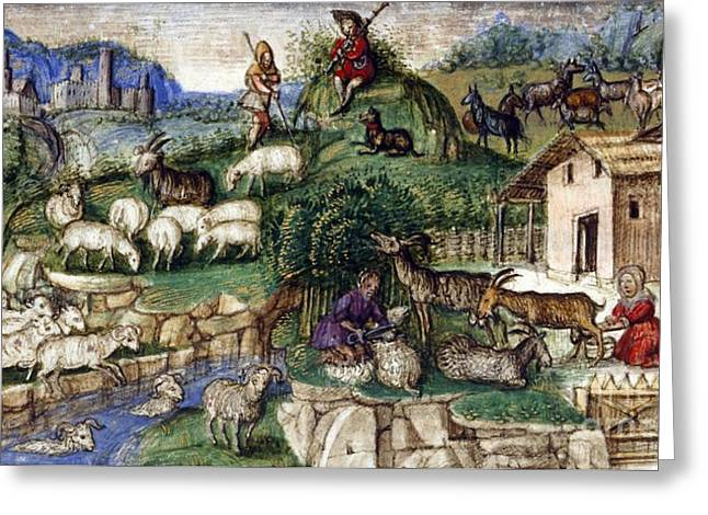 Pastureland Greeting Cards - Pastoral Scenes, 15th Century Greeting Card by British Library