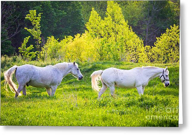 Pastoral Texas Greeting Card by Inge Johnsson