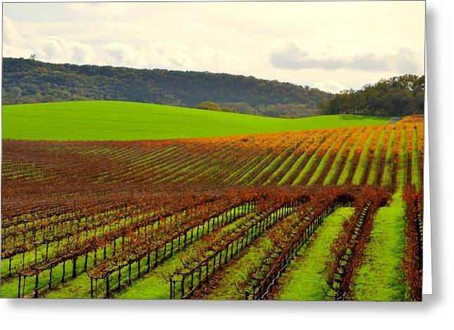Pastoral Vineyards Of Asti Greeting Card by Antonia Citrino