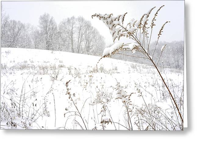 Pasture Scenes Greeting Cards - Pasture Field in Winter Greeting Card by Thomas R Fletcher