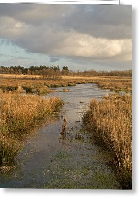 Flooding Photographs Greeting Cards - Pasture Of Plenty Greeting Card by Odd Jeppesen