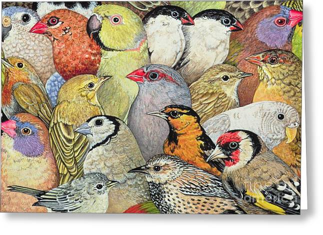 Animals Greeting Cards - Patchwork Birds Greeting Card by Ditz